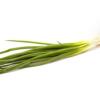 Cebolinha (molhe) - orgânico
