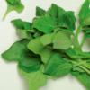 Espinafre (molhe) - orgânico