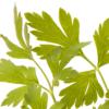 Cheiro Verde (molhe) - orgânico