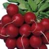 Rabanete (molhe) - orgânico